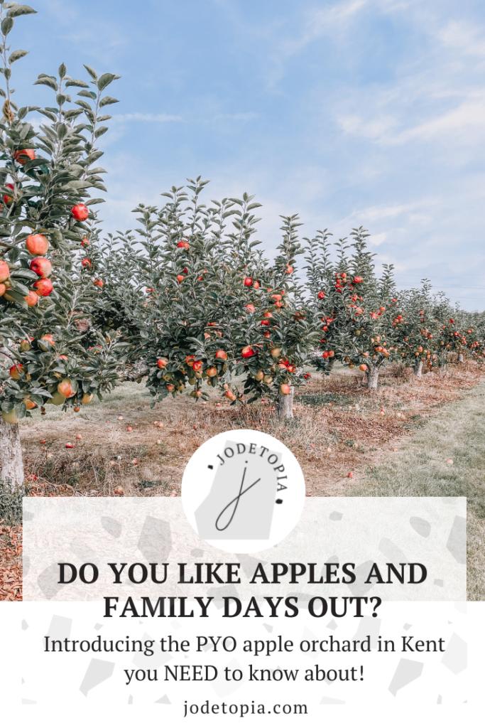 Apple picking in kent pinterest image